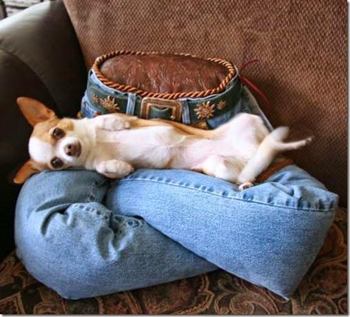 lap-of-luxury-pet-beds