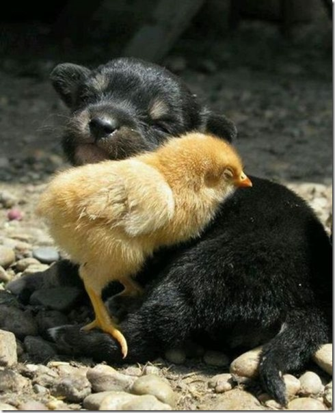 funny-animals-cute-27