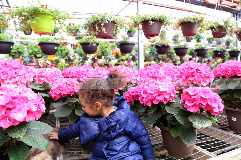 AOI at the garden center