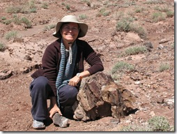 2012-04-15 Petrified Wood, Fry Canyon, UT (53)