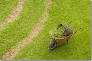 1205753_wheelbarrow_and_grass