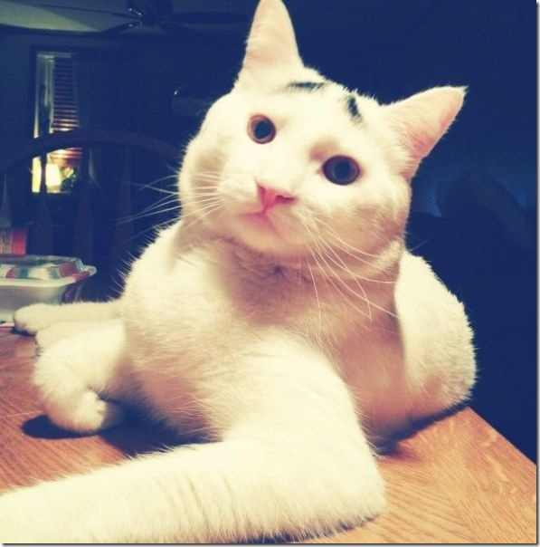 white-cat-eyebrows-6