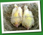 canarios 2011 004