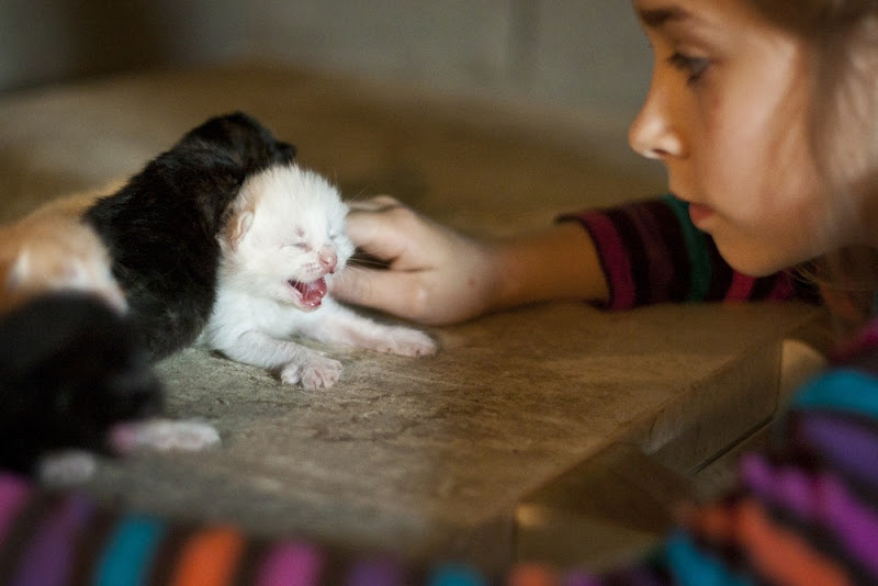 Cute-Kitten-01