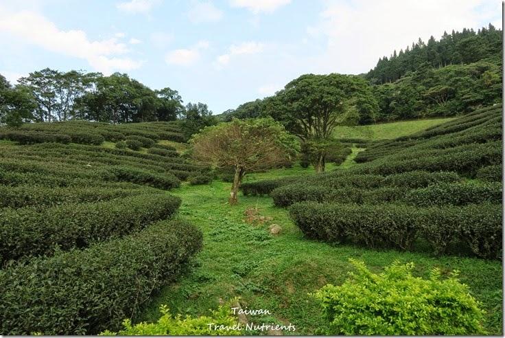 三峽熊空茶園 (25)