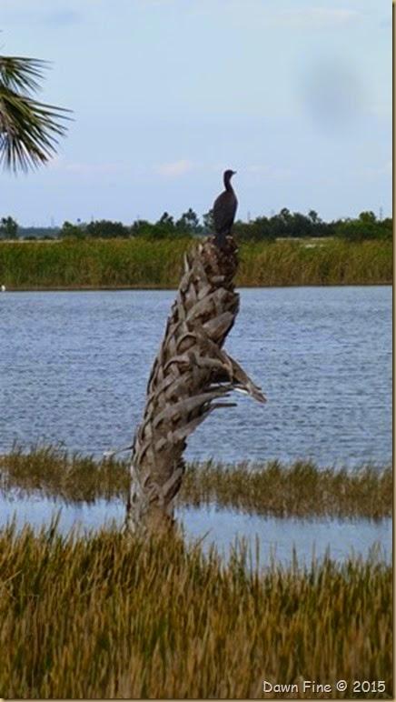 Viera Wetlands (31)