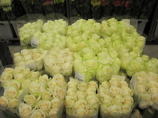The roses in the store are organized by height and color.