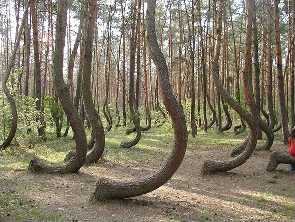 اشجار غريبة4