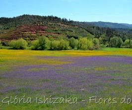 Glória Ishizaka - flores do campo 3