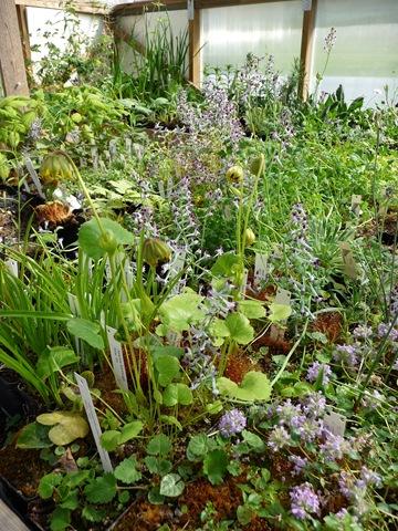 050 Ett av växthusen hos Spezialplant i Hammarstrand