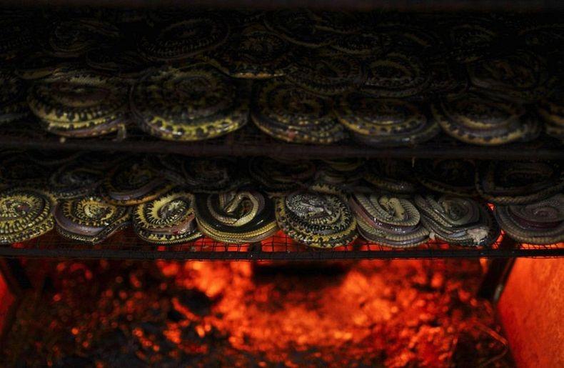 snake-slaughterhouse-7