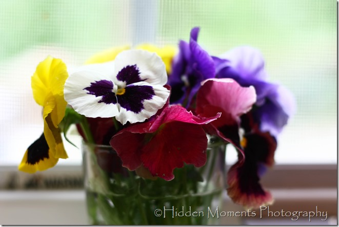The Last of the Pansies