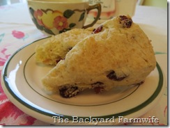 cranberry orange cream scones - The Backyard Farmwife