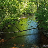 Small Creek Before Flowing Into Trout Lake / Vilas County / Northern Wisconsin