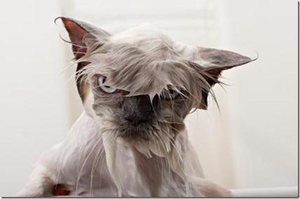 wet_cat_9
