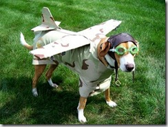 aereo cane