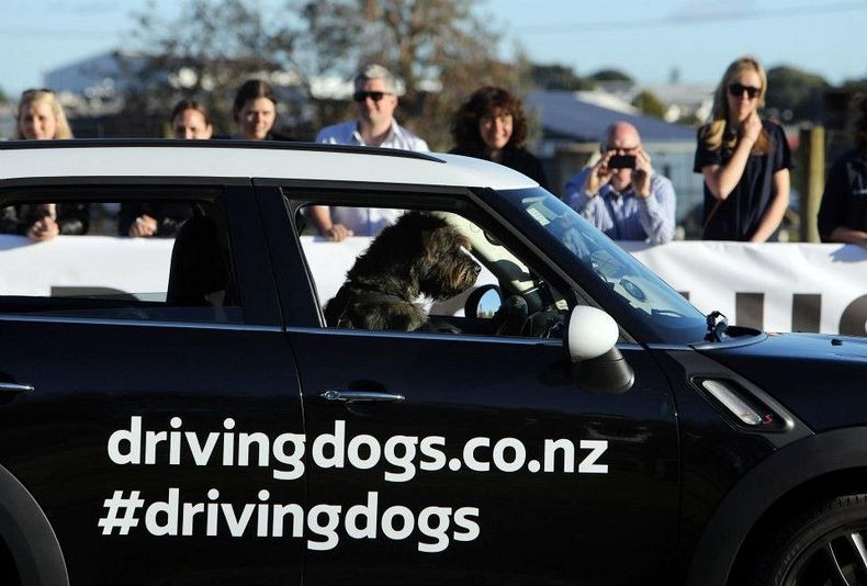 'Motor mutts': Dogs learn to drive in New Zealand - The ...