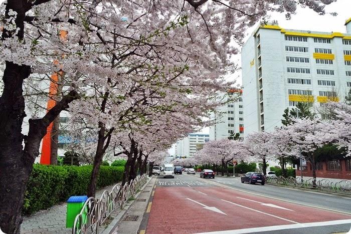 Japan April 2015 024