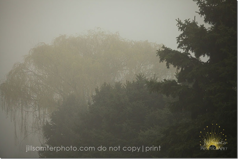 fog-5406