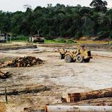 コンセッション内の伐採林は野生動物たちの生存を支えることが可能なのか?/ Can forests in logging concession areas support viable population of wildlife?