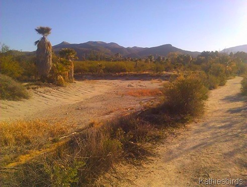 3. Agua Caliente Park dry pond-kab