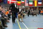 20130510-Bullmastiff-Worldcup-1358.jpg