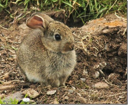 6 baby-bunny (2)