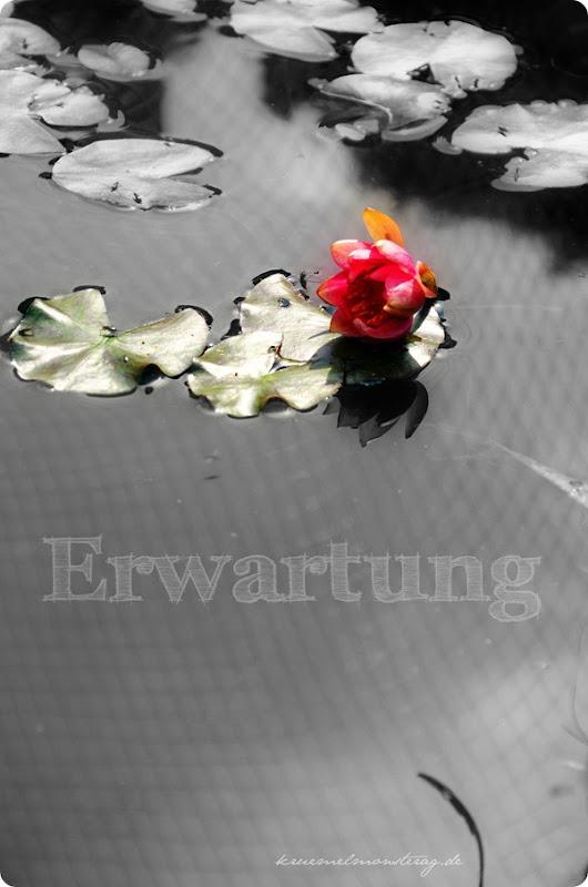 eweb KW 24 Erwartung