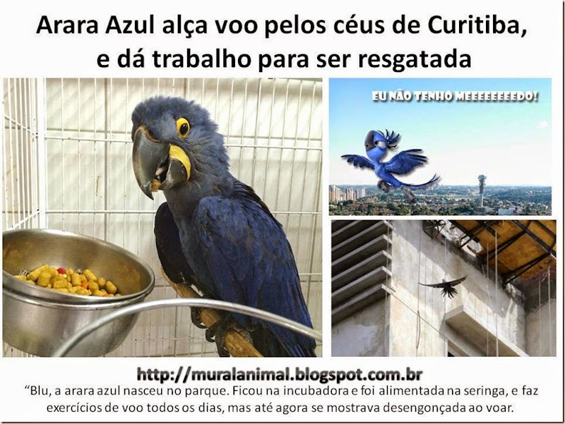 blu-arara-azul