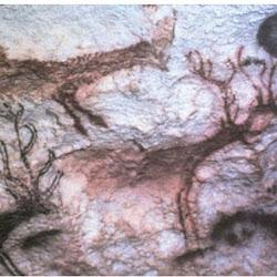 11 - Ciervos en la cueva de Lascaux (Francia)