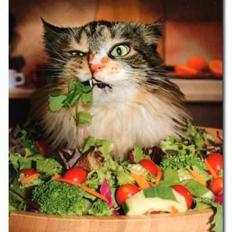 Kucing Ini Vegetarian