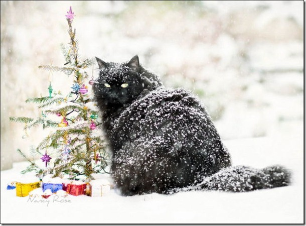 cats-play-snow-22