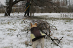 Pruning the Apple Trees at the Farm
