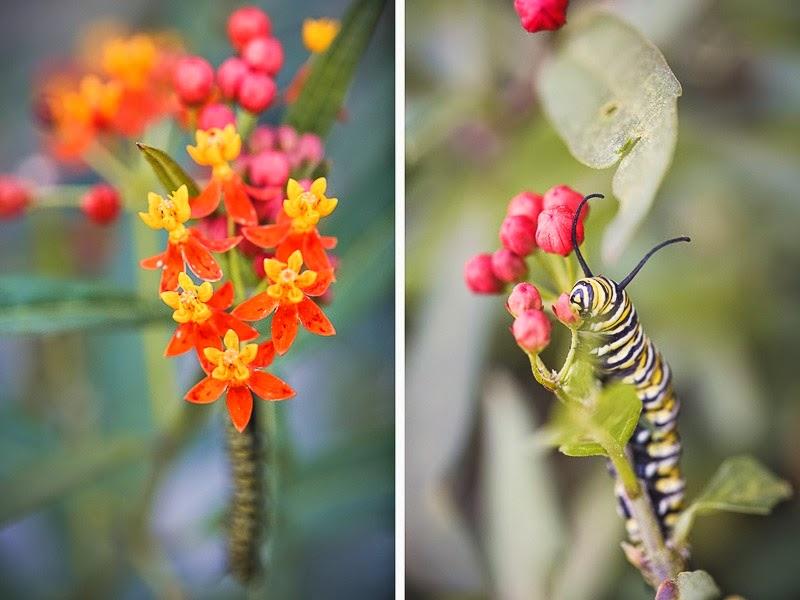 caterpillars-14