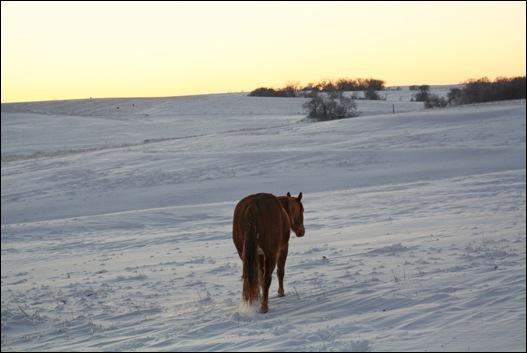 snow horses 101b copy