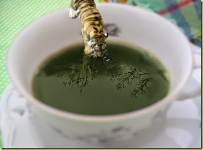 Tiger_in_a_teacup