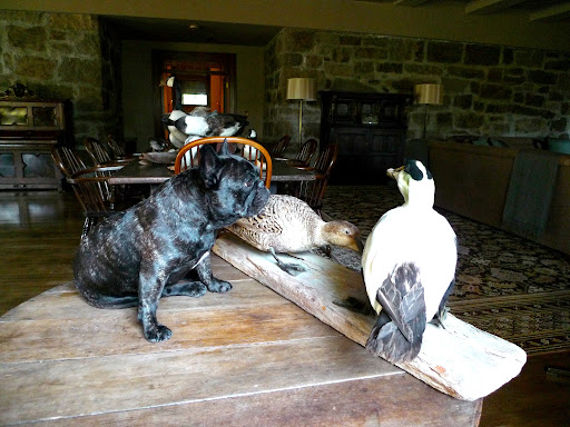 One thing I don't understand is Martha's fascination with taxidermy.  The word 'taxidermy' is derived from two ancient Greek words; taxis, meaning movement; and derma, meaning skin.  Do you think these ducks still have their skin?