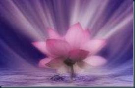 lotus_ sagrado_vidaeterna