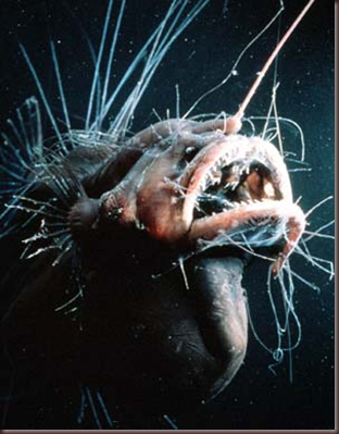 Amazing Animals Pictures Angler Fish (10)