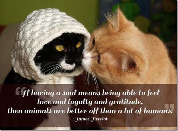 pet-quotes-love-2