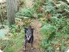 dog in hudeshope woods