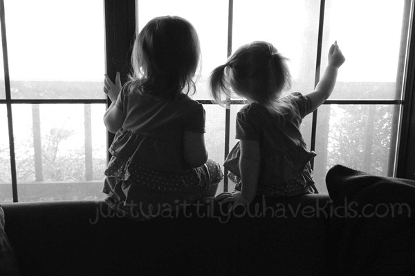 Window Buddies