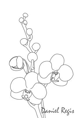 (Phalaenopsis Doris x Ascocentrum miniatum)