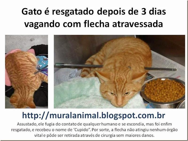 gato-flecha-cupido