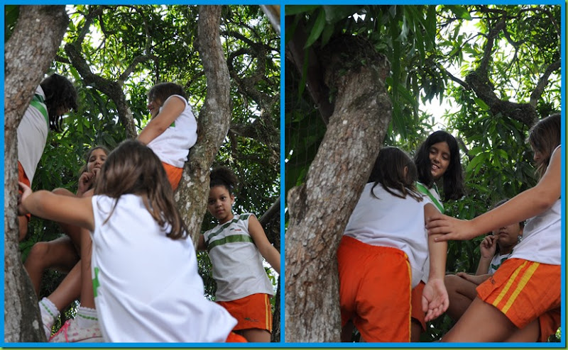 Casa da árvore4