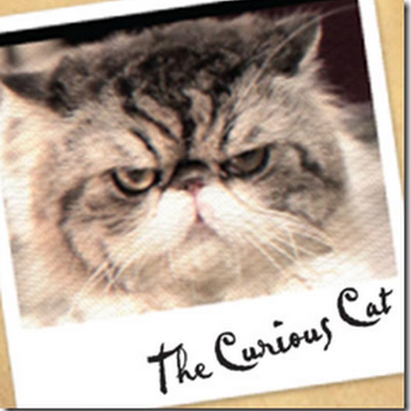 Curious Cat , bukan sebarangan kucing !
