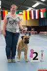 20130511-BMCN-Bullmastiff-Championship-Clubmatch-1687.jpg