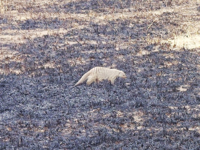Serengeti 1 151.JPG