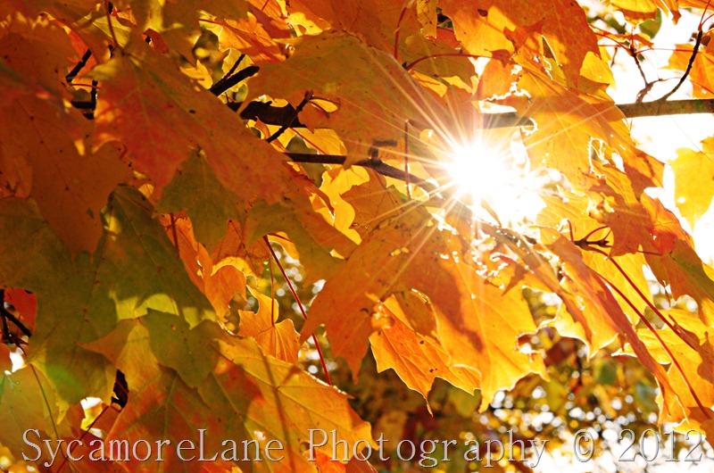 fall leaves 2012-3