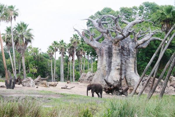 Magic Kingdom & Animal Kingdom 331